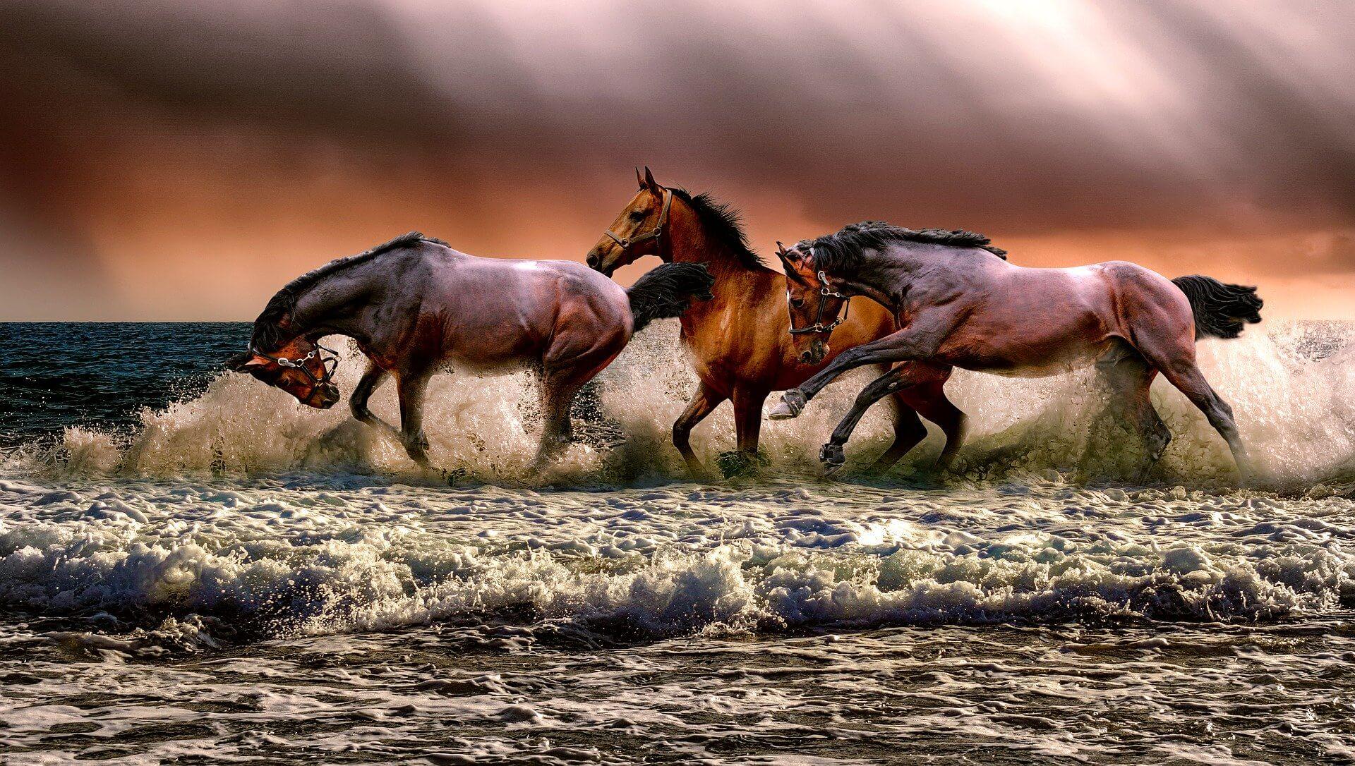 zanimljivosti o životinjama konji
