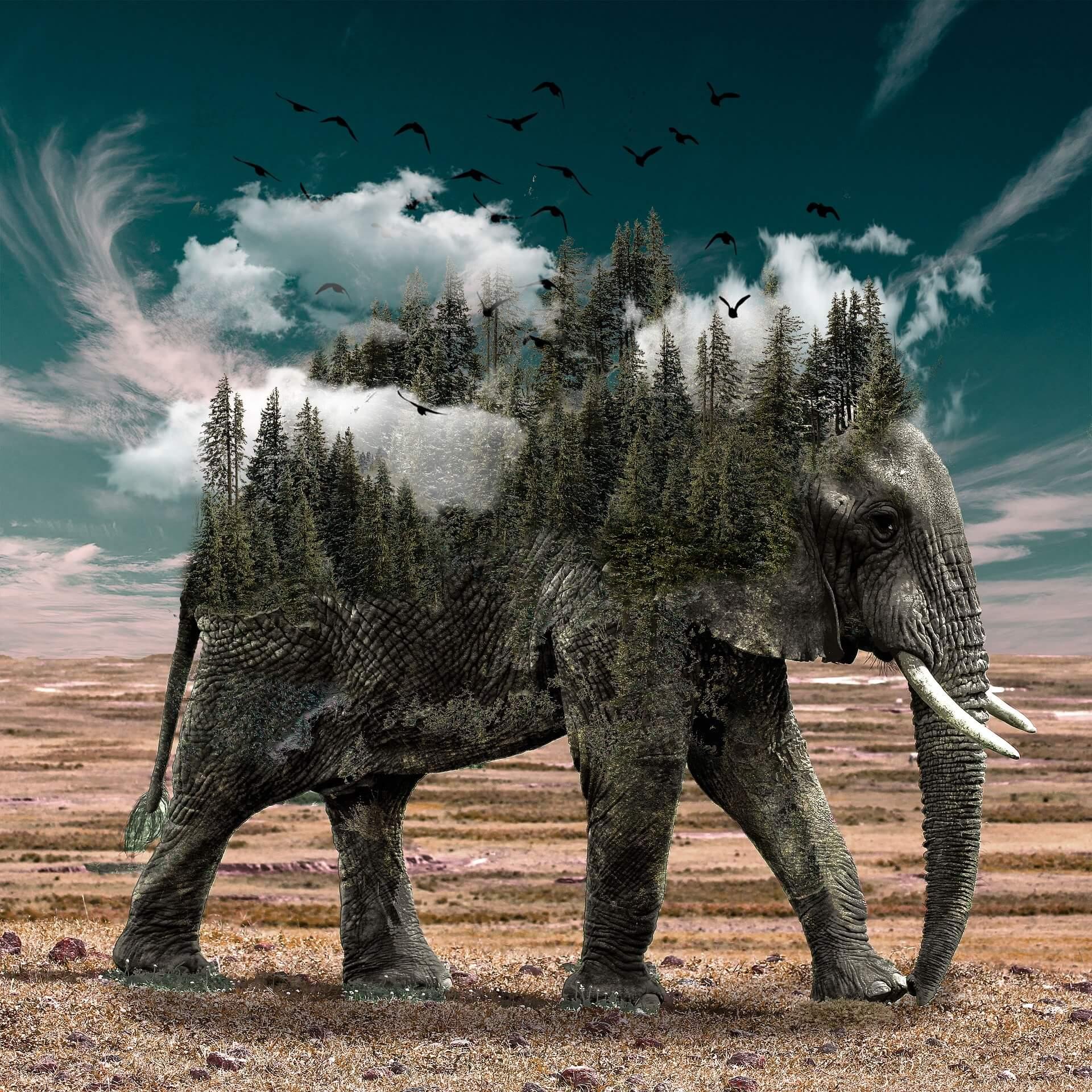 zanimljivosti o životinjama slon